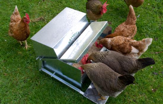 grandpas chicken feeder