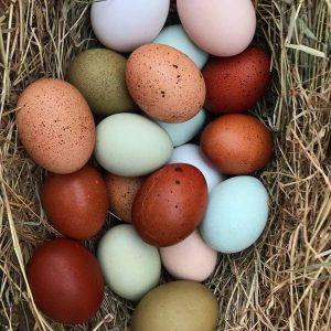 olive egg farm