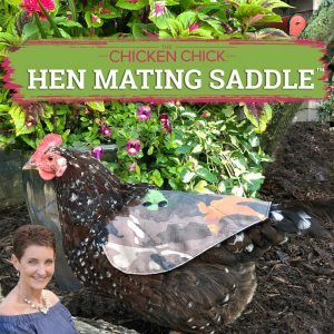 chicken chick hen mating saddle front