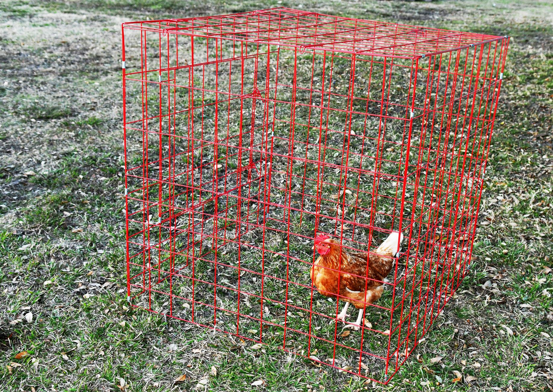 5 Pack Red Galvanized Metal Square Chicken Coop Breeding Cage Drop